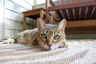 Katze wartet alleine