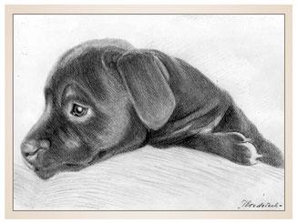auftragsmalerei-inna-bredereck-Bleistiftzeichnung-hundewelpe-gemaelde-hundekopf-hundeportrait-kunstwerk