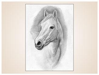 auftragsmalerei-inna-bredereck-Bleistiftzeichnung-nuestern-schimmel-pferdekopf-gemaelde