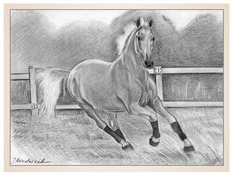 auftragsmalerei-inna-bredereck-kunstwerk-pferdeportrait-bandagen-pferd-weide-wiese