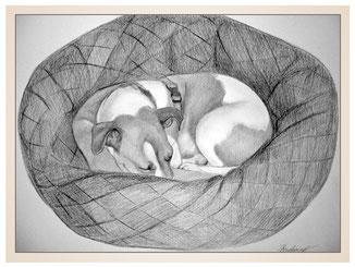 auftragsmalerei-inna-bredereck-Bleistiftzeichnung-koerbchen-hundedecke-schlafen-hund-gemaelde-hundeportrait-kunstwerk