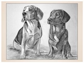 auftragsmalerei-inna-bredereck-Bleistiftzeichnung-hunde-fell-gemaelde-hundeportrait-kunstwerk
