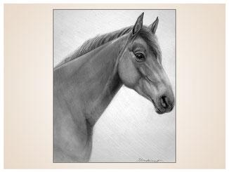 auftragsmalerei-inna-bredereck-Bleistiftzeichnung-pferdekopf-gemaelde
