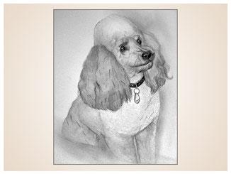 auftragsmalerei-inna-bredereck-kohlezeichnung-pudel-halsband-gemaelde-hundeportrait-kunstwerk