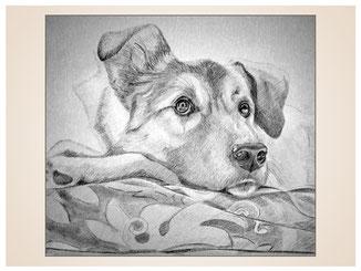 auftragsmalerei-inna-bredereck-Bleistiftzeichnung-hund-decke-gemaelde-hundeportrait-kunstwerk