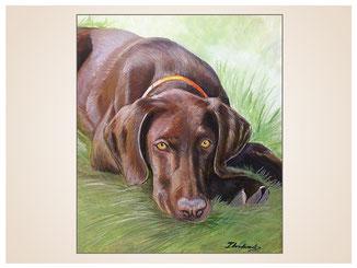 auftragsmalerei-inna-bredereck-farbstiftzeichnung-ausruhen-jagd-hund-wiese-gemaelde-hundeportrait-kunstwerk