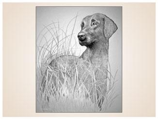 auftragsmalerei-inna-bredereck-kunstwerk-portrait-graeser-jagdhund-achtsamkeit