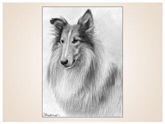 auftragsmalerei-inna-bredereck-kunstwerk-portrait-collie-lassie-hunderasse