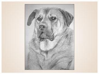 auftragsmalerei-inna-bredereck-kunstwerk-portrait-neufundlaender-rasse-hundeportrait