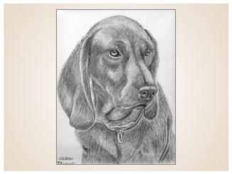 auftragsmalerei-inna-bredereck-kunstwerk-portrait-schlappohren-hundeportrait-halsband-hundekopf
