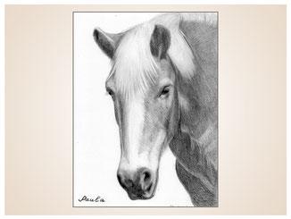 auftragsmalerei-inna-bredereck-bleistiftzeichnung-pferdekopf-maehne-nuestern