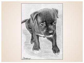 auftragsmalerei-inna-bredereck-kunstwerk-portrait-hundewelpen-suess-hundepfoten