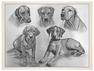auftragsmalerei-inna-bredereck-kohlezeichnung-gemaelde-hundekoepfe-hundeportrait-kunstwerk