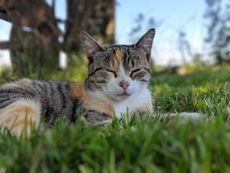 Katzen auf dem bauernhof