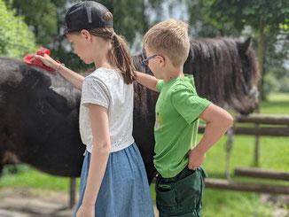 Ponys striegeln auf dem Victorhof