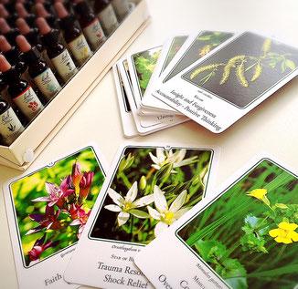 花の写真のカードを使ってエッセンスを選びます。