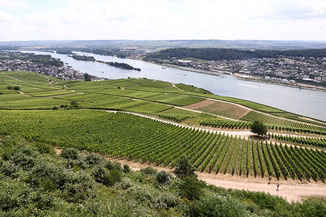 Vineyards above Rüdesheim
