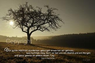 Baum bei Sonnenlicht