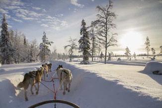 Winter Wonderland in Finnland erleben