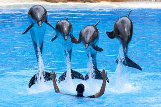 Delfine im Loro Park auf Teneriffa