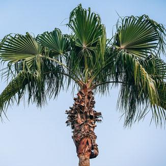 Palme - Erlebe Deinen exklusiven Urlaub in Marokko | Die Reiserei, Dein Reisebüro in Berlin & Brandenburg