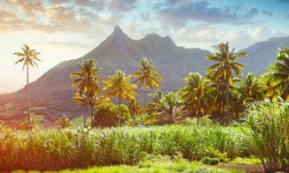 Natur auf Mauritius, Indischer Ozean