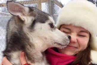 Husky und Kind in Finnland