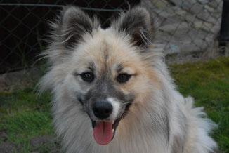 Luna ( Emmy ) von der kleinen Farm