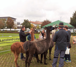Auch die großen Besucher freuen sich an den Lamas
