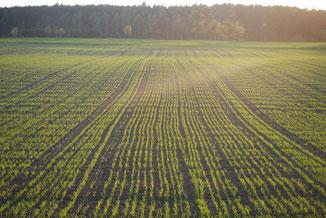 Optimisez le rendement de vos semences avec la gestion de l'irrigation et les solutions agralis
