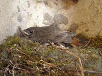 Les petits dans le nid