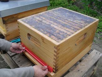 Vorsichtig wird der Verschluss des Ausflugs geöffnet. Oben sieht man die mit Bienen vollbesetzten Wabenrämchen.