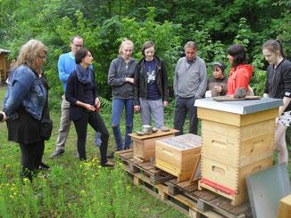 ...und interessieren sich für die Bienenhaltung. Inzwischen haben wir unser Bienenvolk  geteilt. Die Arbeiterinnen des Ablegers haben eine neue Königin herangezogen und so es ist ein zweites Bienenvolk entstanden.