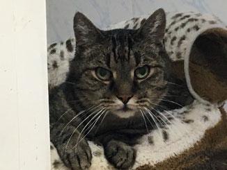 Einer seiner Lieblingsplätze: das Plüschsofa im Wandabteil des Katzenzimmers , das er gemeinsam mit seinem besten Freund Theo bewohnte. Auch er vermisst ihn - sie waren immer zusammen..