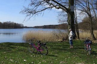 Radfahrer am See in der Schorfheide, Uckermark im Land Brandenburg