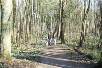 Wandern in den Wäldern von Templin
