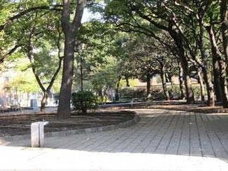横浜市・横浜公園の樹木