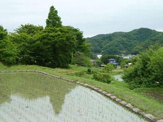 神奈川県・田植えが終わった葉山の棚田