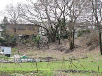 藤沢市・境川遊水地公園付近の畑