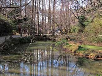 川崎市・生田緑地の池とメタセコイア