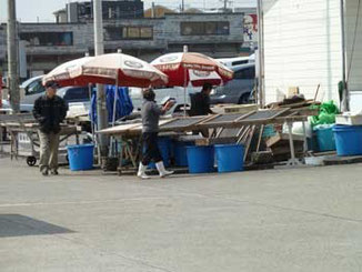 鎌倉市・腰越漁港のしらす直売所