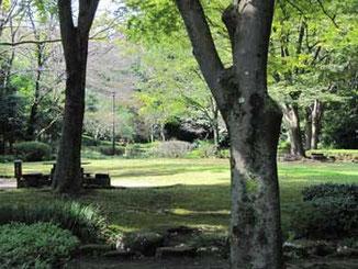 東京都・町田市の芹が谷公園の広場