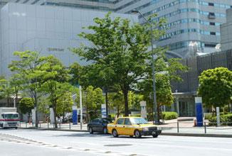 横浜市・みなとみらいのケヤキ通り