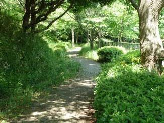 横浜市・本牧山頂公園の散策道