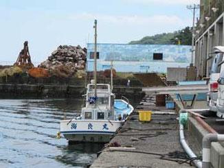 神奈川県・真鶴漁港の魚市場