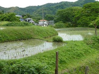 神奈川県・葉山上山口の田んぼ