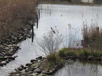 県立境川遊水地公園俣野ビオトープ