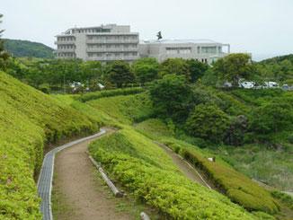 神奈川県・湘南国際村のツツジの丘