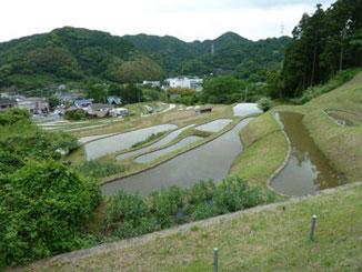 神奈川県・頂上付近の葉山の棚田