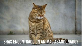 ¿¿Qué hacer si encuentras un animal abandonado?